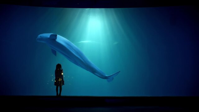 Ker Sound HAICHANG_OCEAN_PARK